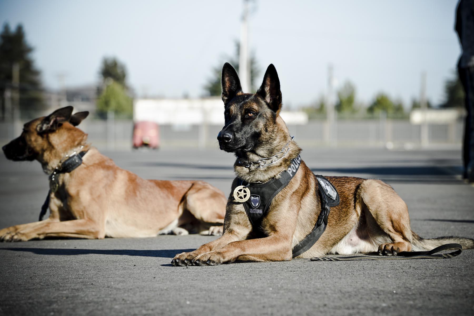 K9 unit dogs