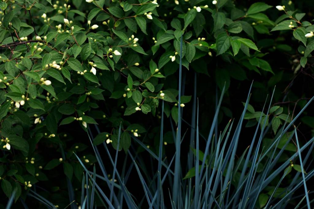 hide in bushes